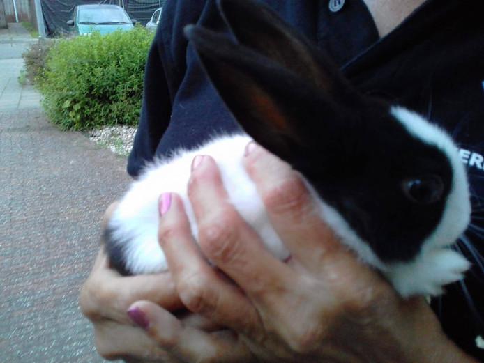 Het konijn zat in een dichtgeknoopte vuilniszak, maar maakt het goed.