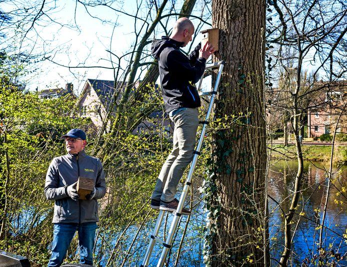 Arwin de Boer (l) van het IVN en een collega hangen nestkastjes op bij de begraafplaats aan de Woerdense Meeuwenlaan. De nestkastjes moeten kool- en pimpelmezen - de natuurlijke vijanden van de eikenprocessierups - aantrekken.