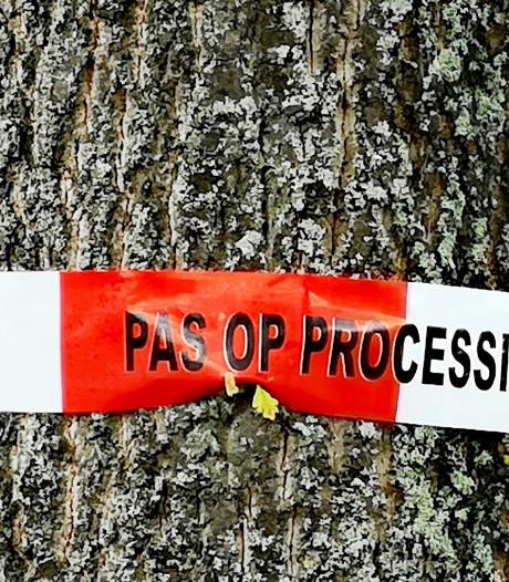 Gemeente Oldenzaal zet alles op alles in strijd tegen processierups