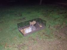 Verwaarloosde konijntjes gedumpt achter op oprit in Ravenswaaij