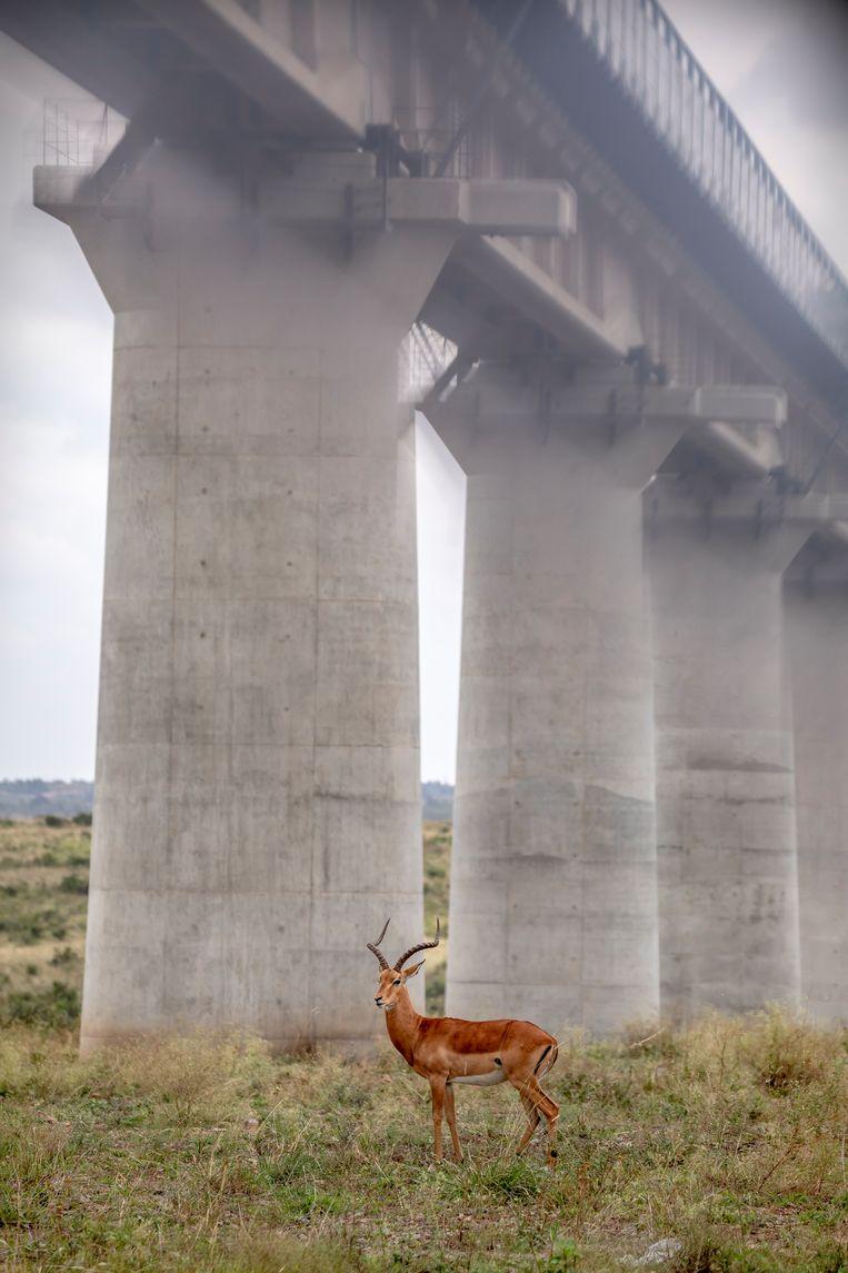 Betonnen pijlers van een spoorlijn doorkruisen Nairobi National Park. Beeld null