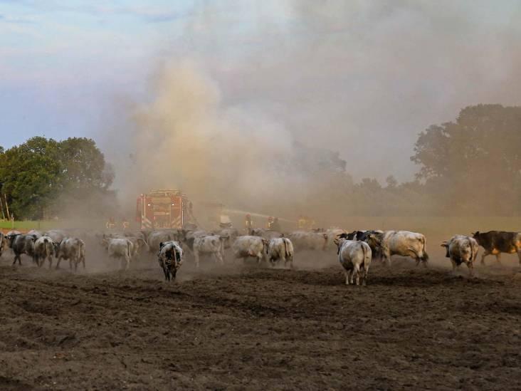 Tractor vliegt in brand op akker in Deurne