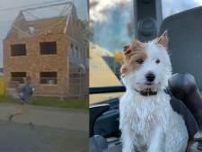 Hardloper die hondje Dribbel doodstak voelde zich bedreigd