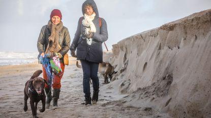 Weer grote zandkliffen aan onze kust: waar komt dit dure, winterse fenomeen vandaan?