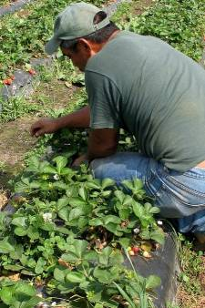 Roep om regels huisvesting arbeidsmigranten in Werkendam
