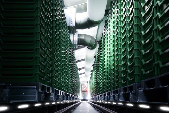 Zo ziet 'vertical farming' bij Protifarm eruit.