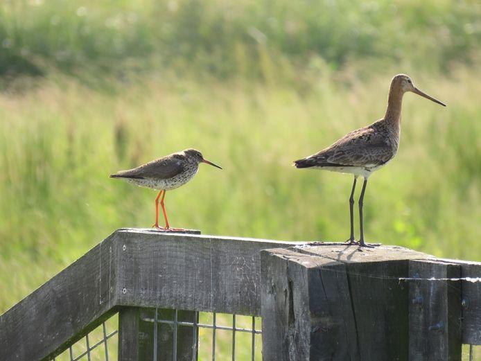 Het water in de gebieden werkt als een magneet voor de vogels.
