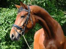 Waar is Belle Amie? Zoetermeerse familie Klos beroofd van oma's paard