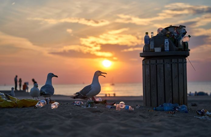 Meeuwen jagen op het achtergebleven vuilnis op het strand van Scheveningen.