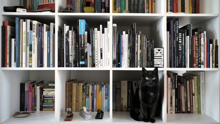 Een zwarte poes in een boekenkast. Beeld Joost van den Broek / de Volkskrant