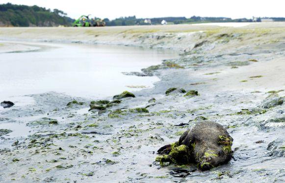 In 2011 stierven er meer dan 30 wilde zwijnen in het gebied.