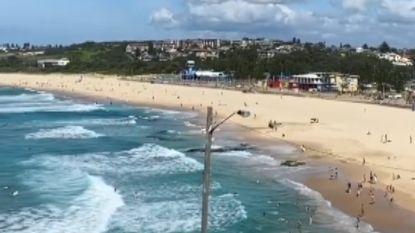 Het lijkt wel oorlog: in Sydney jaagt luide sirene mensen van strand