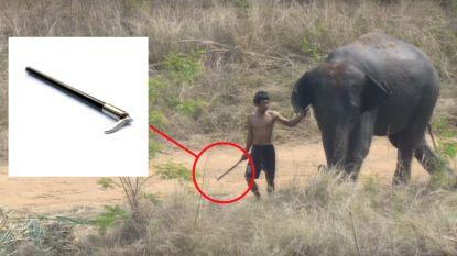 Thaise olifantenpolo afgelast nadat video barbaarse praktijken aan het licht brengt