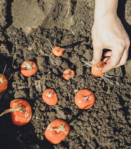 Ga de tuin in: nú is de tijd om je zomerbollen te planten