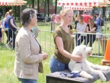 Dierenartsen in spé repareren kapotte teddyberen in Utrecht: 'Iemand moet het doen'
