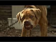 Le chien de Godard ratatiné par des inconnus