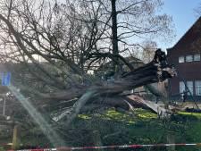Monumentale kastanje in Amersfoort bezwijkt onder storm Christoph