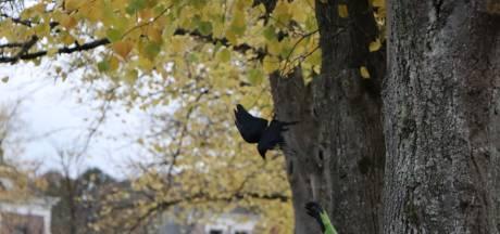 Brandweer Kampen bevrijdt in visdraad verstrikte vogel uit een boom
