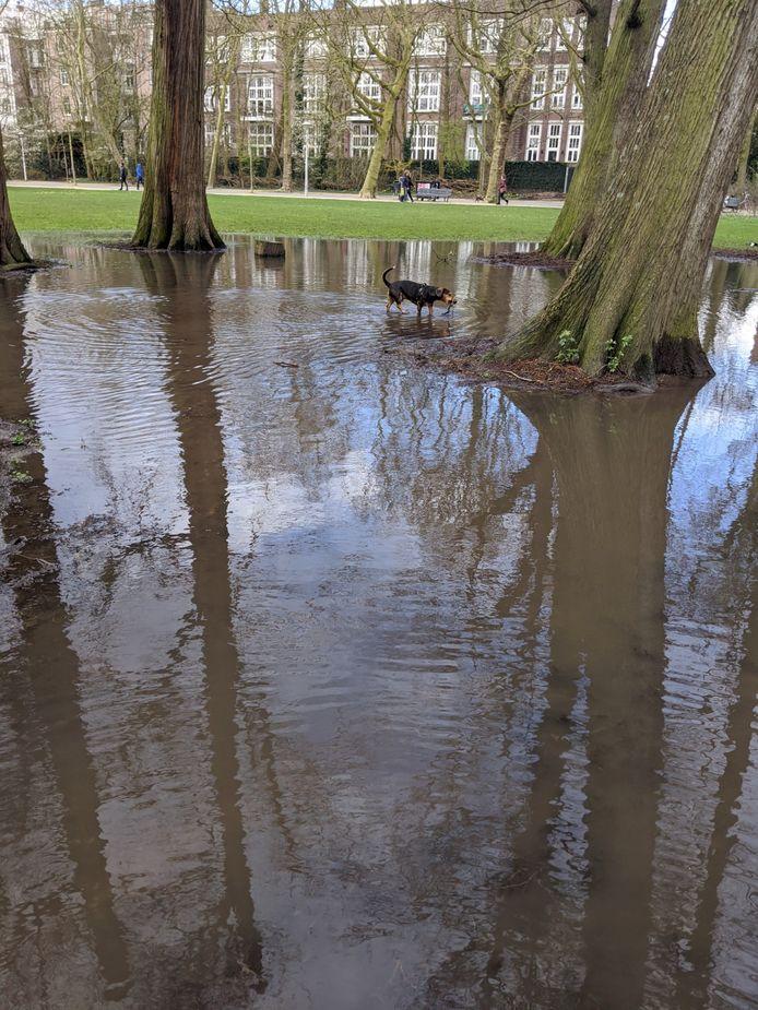 De vaste boom van deze hond is ondanks het water nog gewoon bereikbaar.