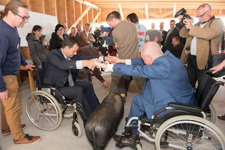 Vice-premier Alexander De Croo en gouverneur Jan Briers (rechts) doen kunstjes met een varken.