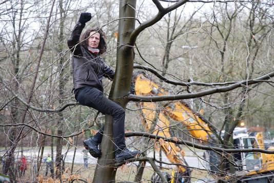 Actievoerder Michel Eggermont protesteert vanuit een boom tegen de kap.
