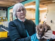 Winanda heeft al 40 jaar hart voor wilde dieren: 'Nog altijd een verrassing wat we in de doos aantreffen'