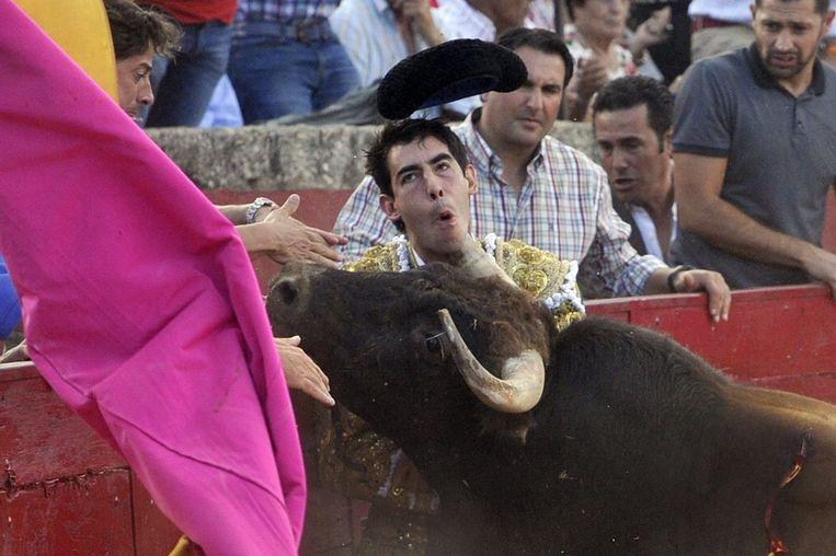 Fortes gisteren in de arena in Vitigudino, Salamanca