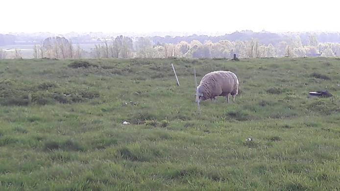 De Bavelse Berg wordt omgebouwd tot zonnepark met wel 80.000 panelen, de schapen grazen er straks onder.