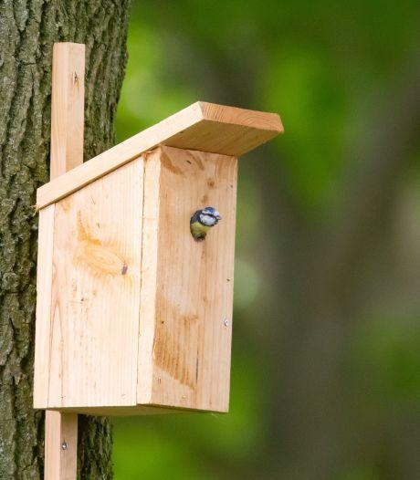 Kool- en pimpelmeesjes vestigden zich massaal in Sleeuwijkse nestkastjes: 'Dit is waanzinnig mooi'