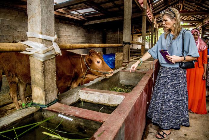 Koningin Maxima is in gesprek met eigenaren van kleine boerenbedrijven in de provincie Lampung. Maxima bezoekt Indonesië als speciaal pleitbezorger van de VN op het gebied van het toegankelijker maken van financiële diensten. Foto Robin Utrecht