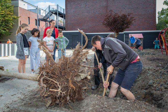 Directeur Sabriene Hendrikse en leerlingen kijken toe hoe Scalda-studenten een boom planten op het plein.