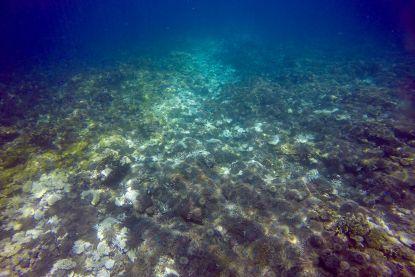Australië investeert 40 miljoen euro om koraalriffen in Great Barrier Reef te redden