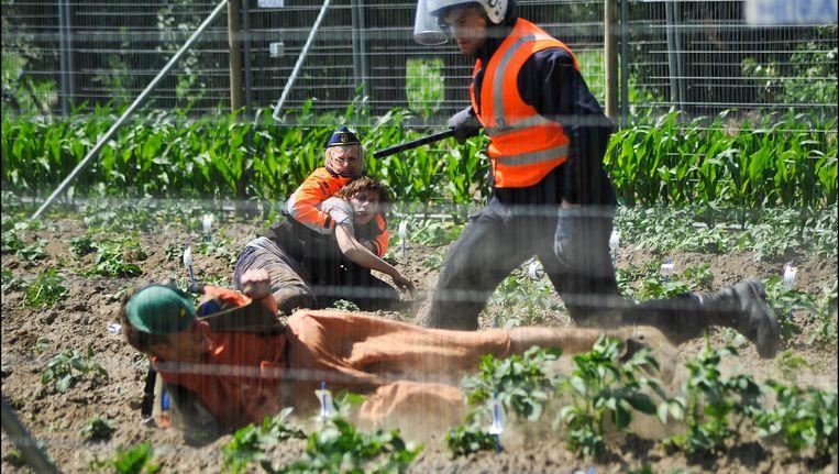In 2011 vernielden activistsen van de Field Liberation Movement een veld met genetisch gemanipuleerde aardappelen in Wetteren.