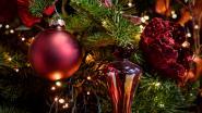In het dierenasiel kan je een cadeautje onder de boom leggen voor de diertjes