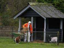 Duiven in Wantijpark hebben geen vogelgriep