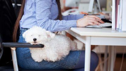 Trend gespot: heb jij al een kantoorhond?
