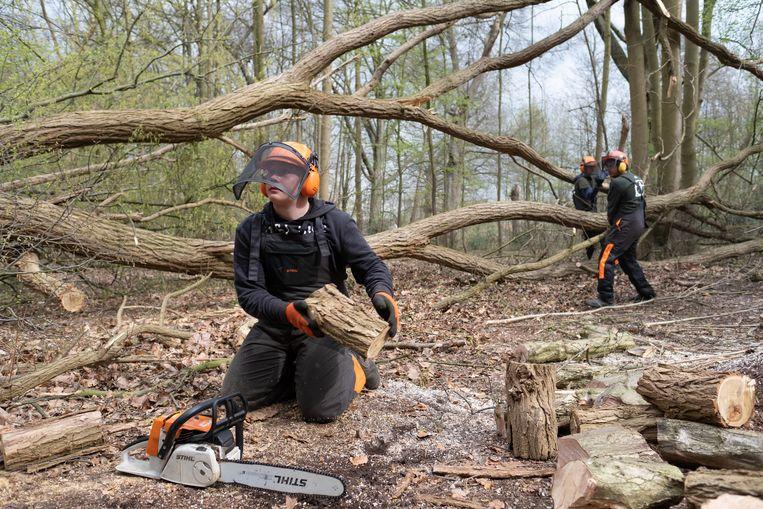 HINGENE Studenten van PTS Mechelen helpen bij de opruim van de stormschade in kasteeldomein d'Ursel