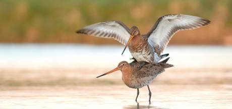 Natuurbeschermers gaan de strijd aan voor het behoud van weidevogels