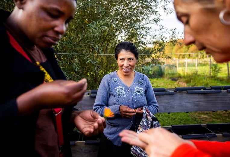 Boerinnen Dorcas Nyamaharo (links) en Maria Chasin Zuniga op boerderijbezoek in Delft. Beeld Freek van den Bergh / de Volkskrant