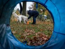 Savant Zorg in Helmond scoort met workshop 'Plezier met je hond'