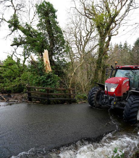 Fluitenbergse boer met dode koeien weet niet waar hij aan toe is na noodlottige rukwind van storm Ciara
