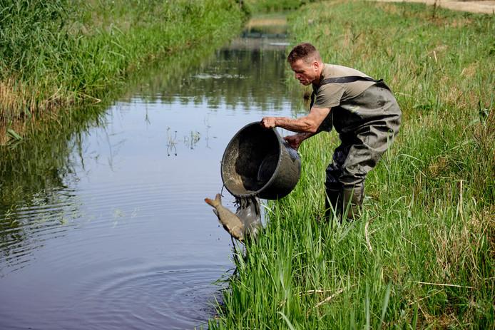 Een medewerker van de gemeente zet de gevangen vissen over in de Goorloop.