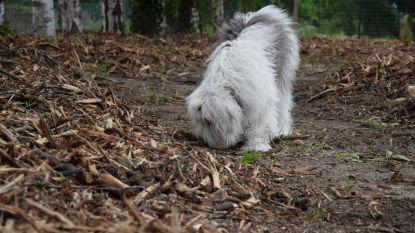 """""""Stimuleert gemoedsrust van honden"""": snuffelweide voor viervoeters in Belsele"""