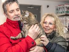 Poes Amy na vijf maanden zwerven in Salland terug bij Duitse baasjes: 'Es ist ein wunder!'