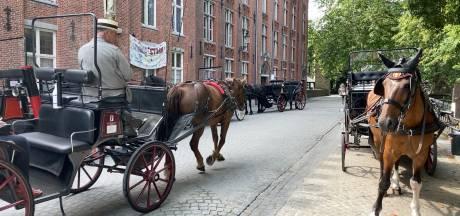 Is het niet door corona, dan wel door de hittegolf: Brugse koetspaarden rijden niet uit