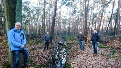 Crowdfunding om bos aan te kopen