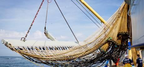 Nederlandse vissers mogen minder haring en tong binnenhalen