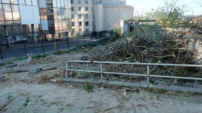 Bomen aan Rijksadministratief Centrum tegen de vlakte ondanks protest