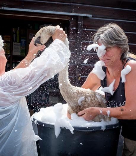 Vogelklas: alle besmeurde zwanen zijn weer schoon