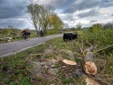 Klacht over bomenkap Defensiedijk; 'Alsof er niet over is nagedacht'